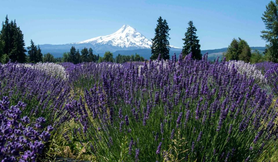 Volcano and wildflowers